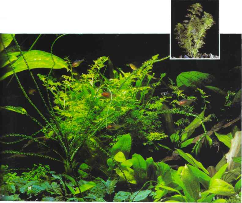 Aquarium Plants Guide