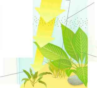 Light Intensity And Plants