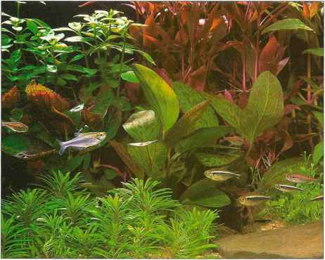 Large Artificial Aquarium Plants