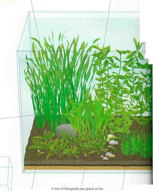 Hard Water Aquatic Plants
