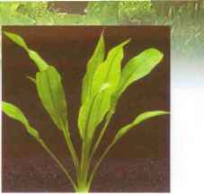 Pics Artificial Hybridisation