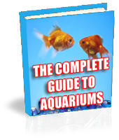 The COMPLETE guide to Aquariums