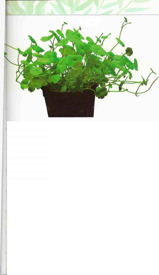 Aquarium Plant Arrangement