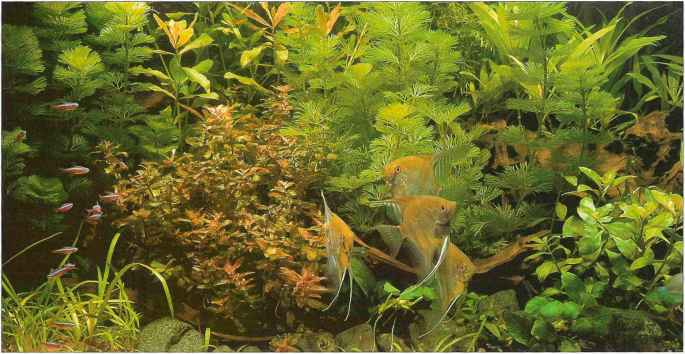 Aquarium Plants South America