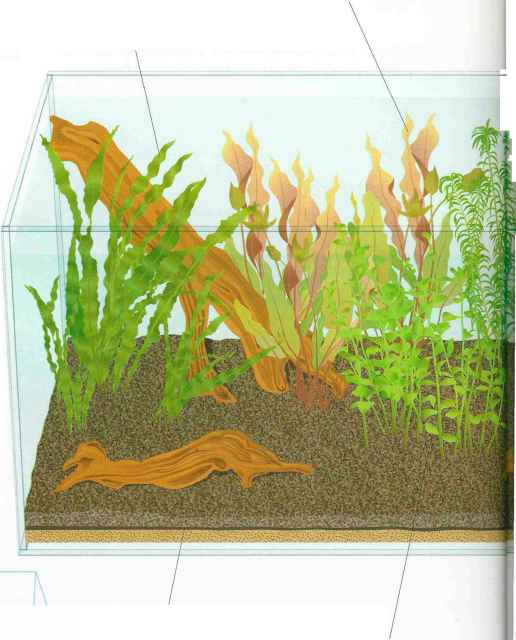 Aquarium Substrate Layer Levels