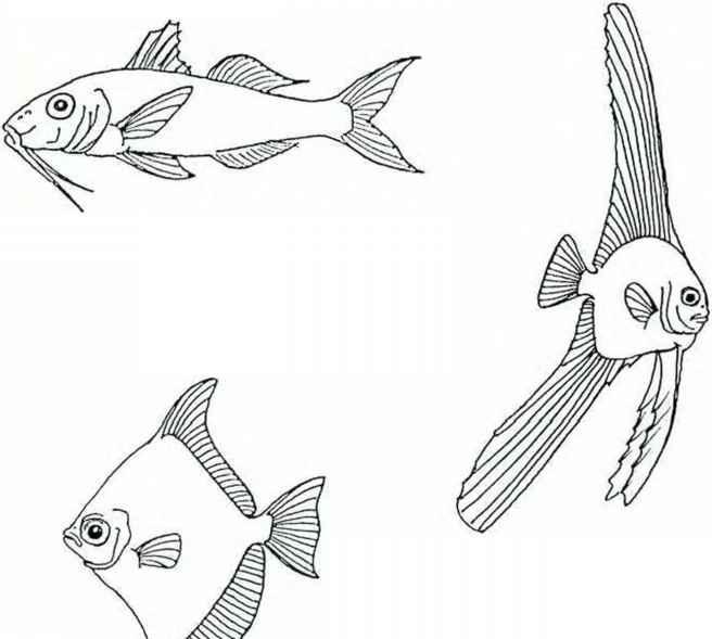 Aquaristic Section - Marine Aquarium - gibell Aquarium Society