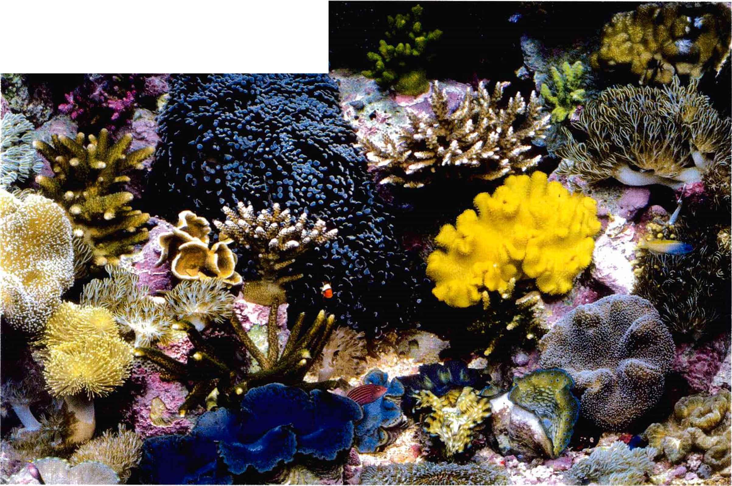 Aquarium Natural Habitat Gibell Aquarium Society border=