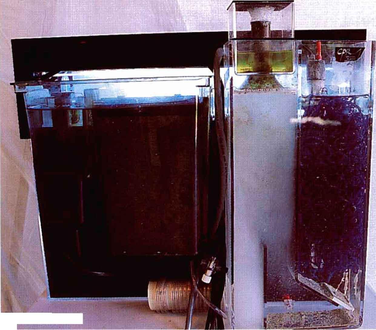Reef Tank Filtration Reef Aquariums Gibell Aquarium