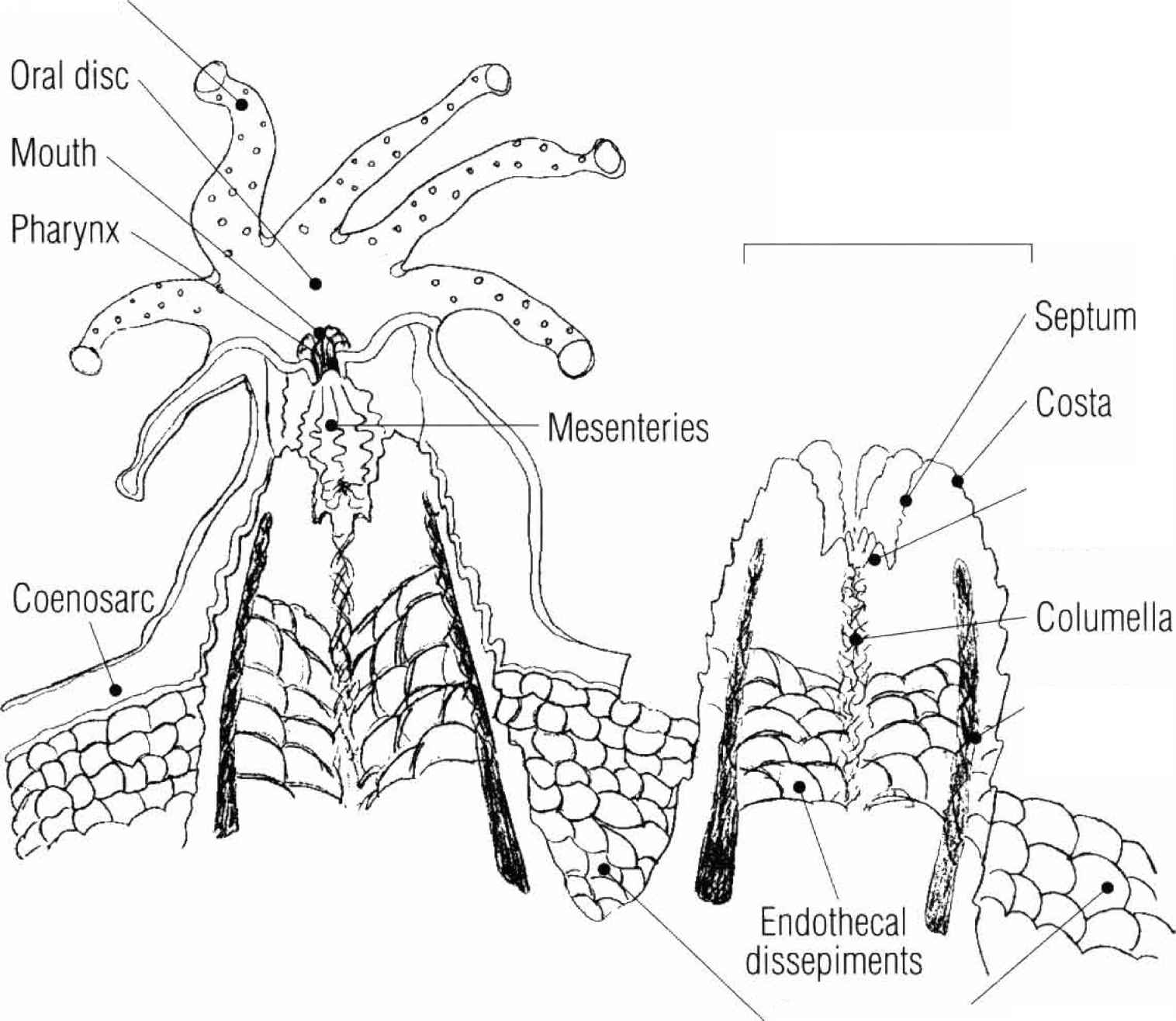 Scientific Nomenclature - Stony Corals - gibell Aquarium Society