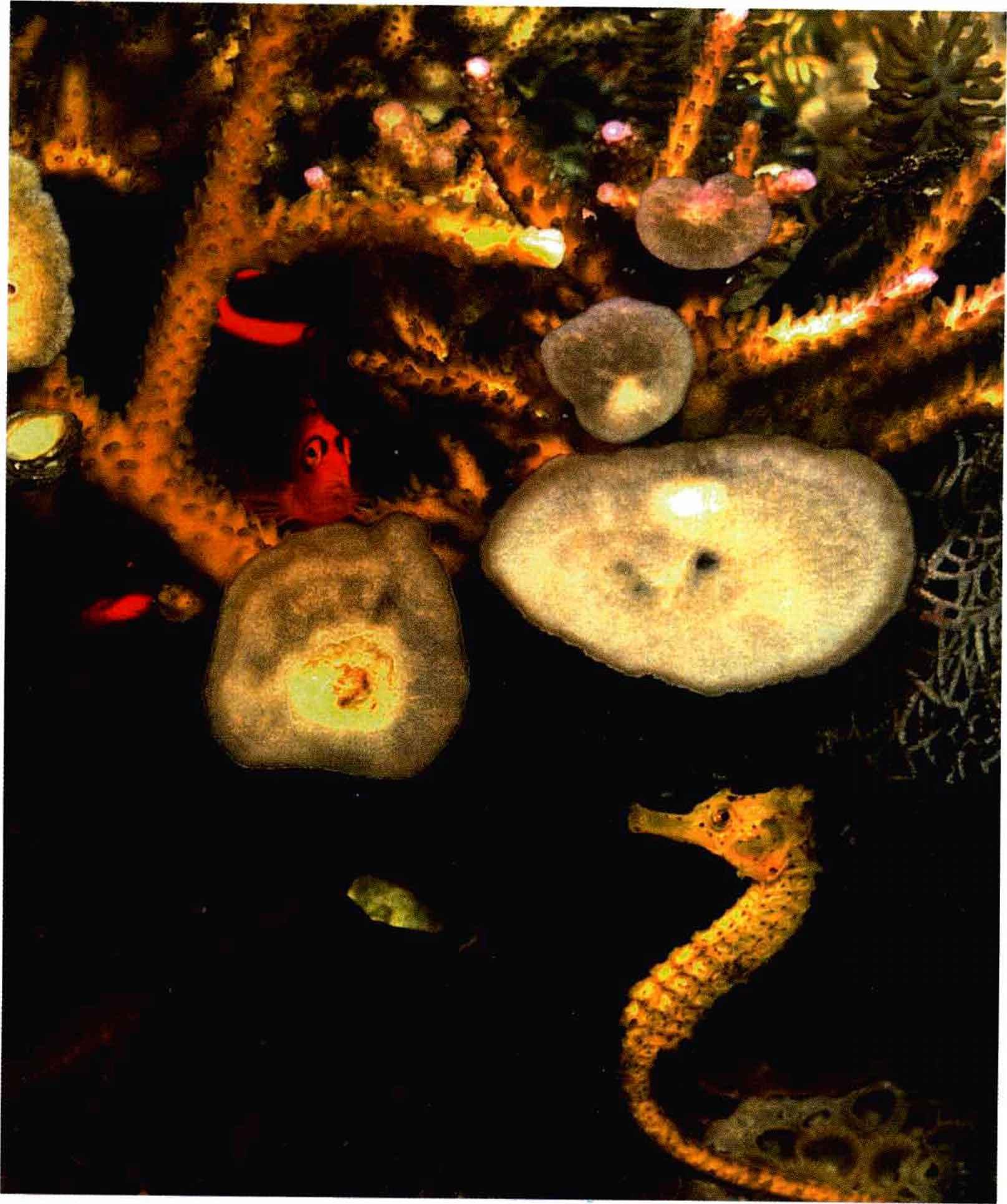how to take care of aquarium fish